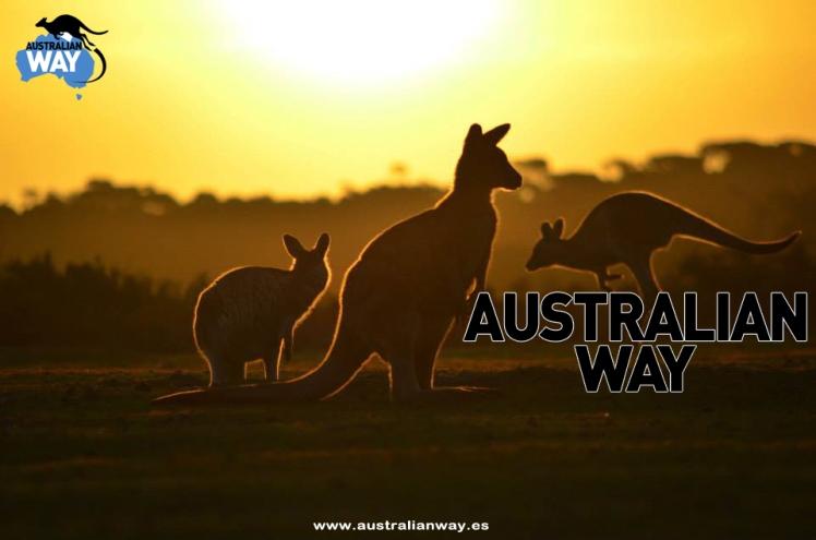 estudia y trabaja en australia.australianway.es.estudiaenaustralia.es3