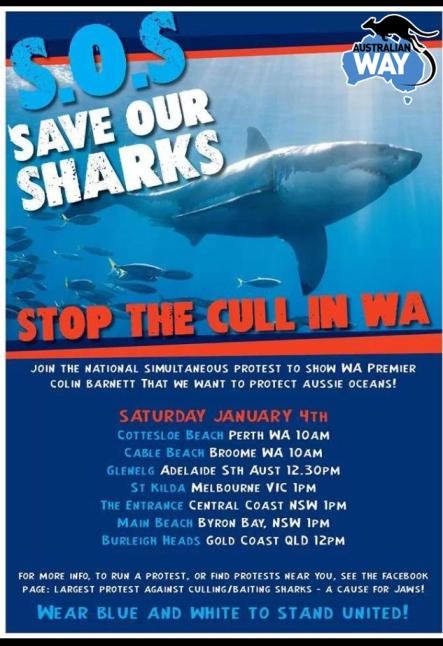 save our sharks. australianway.es. estudiaenaustralia