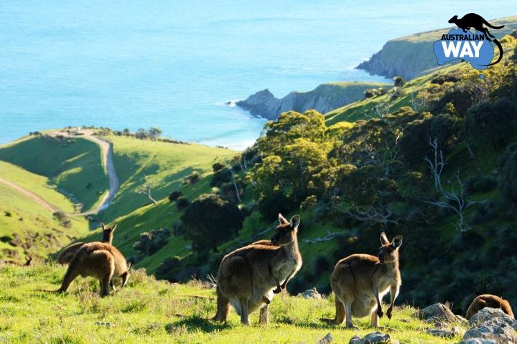 Blowhole beach's. estudia en Australia. australianway.es estudiaenaustralia