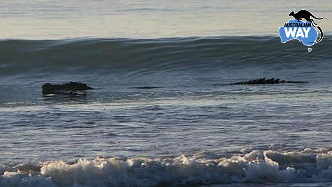 surf cocodrilo en la playa australia. estudiar en australia. australianway.es estudiaenaustralia.es. Broome, Perth, western australia2