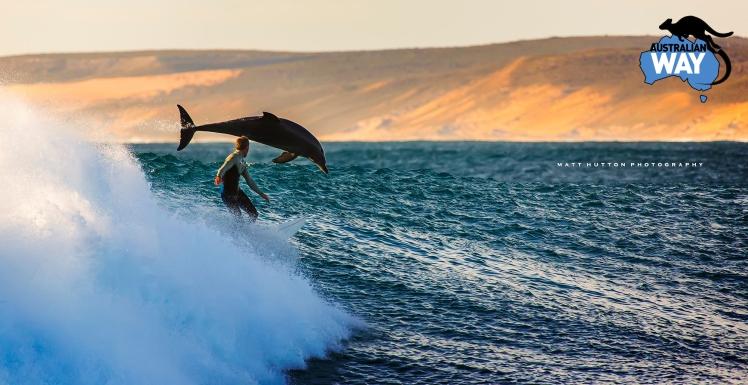 surf con delfines. estudiar en australia, estudia en australia. australianway.es, estudiaenaustralia