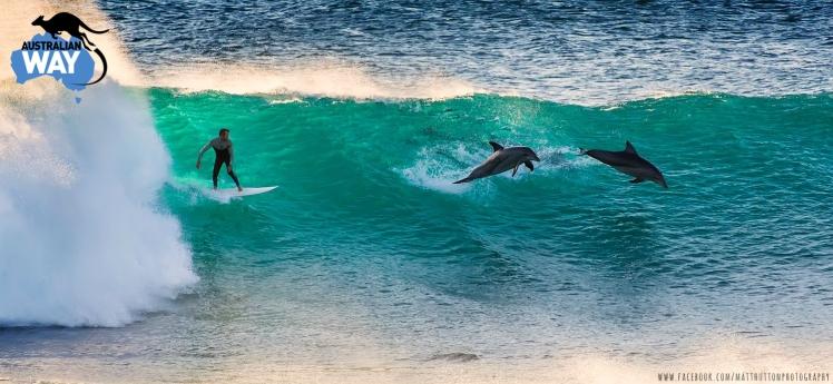 estudiar en australia, estudia en australia. australianway.es, estudiaenaustralia, delfines en australia, surf  en australia, surf con delfines