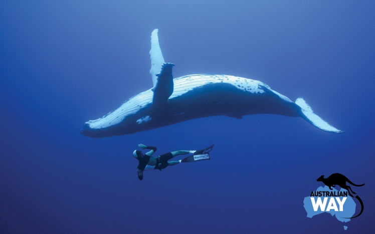 la caza de ballenas en japon, estudiar en australia, estudia en australia, australianway.es, estudiaenaustralia.es, diving with whaves, buceando con ballenas