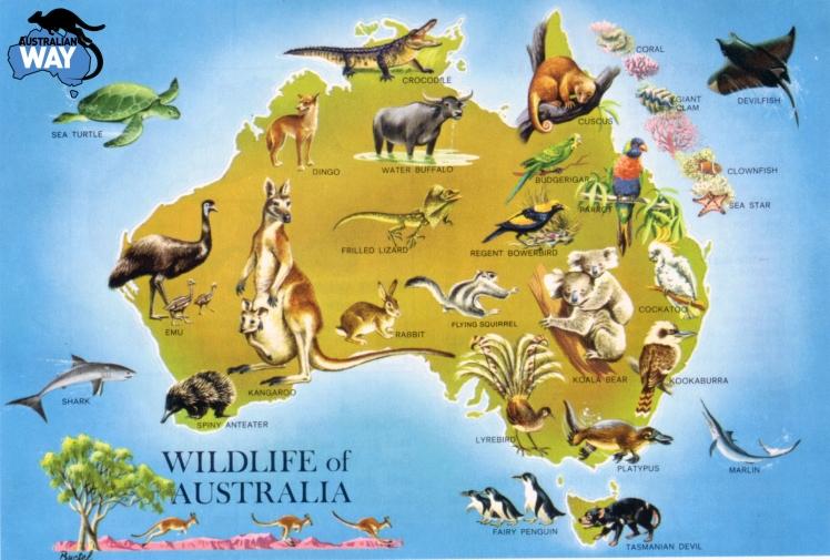 animales australia, estudiar en australia, estudia en australia, australianway.es, estudiaenaustralia