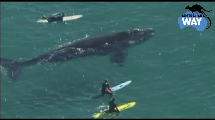 ballena 3o metros, surfistas con ballena australia, estudiar en australia, estudia en australia, australianway.es, estudiaenaustralia.es