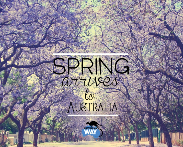 jacaranda, springtime australia, primavera en australia, australian way, estudiar y trabajar en australia, estudiar ingles en australia